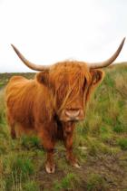 Guía de animales en Escocia