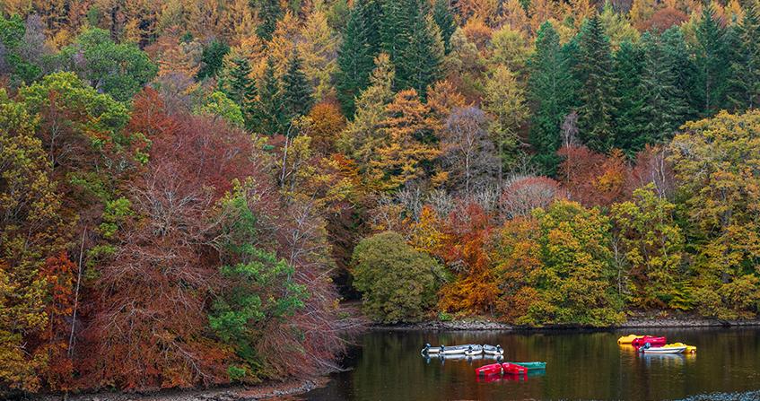 Faskally Woods en Pitlochry