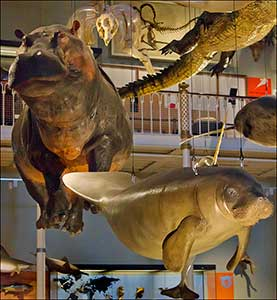 museo de escocia animales