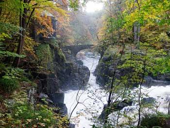bosque hermitage