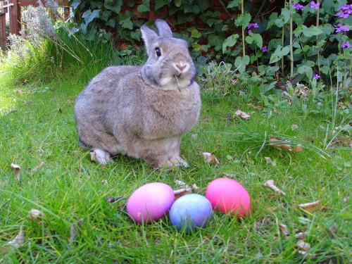 Easter Bunny. El conejo de Semana Santa