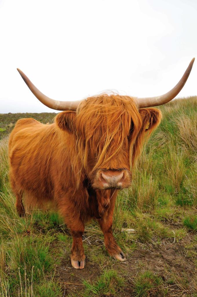 animales escocia